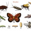 Böcekler Hakkında